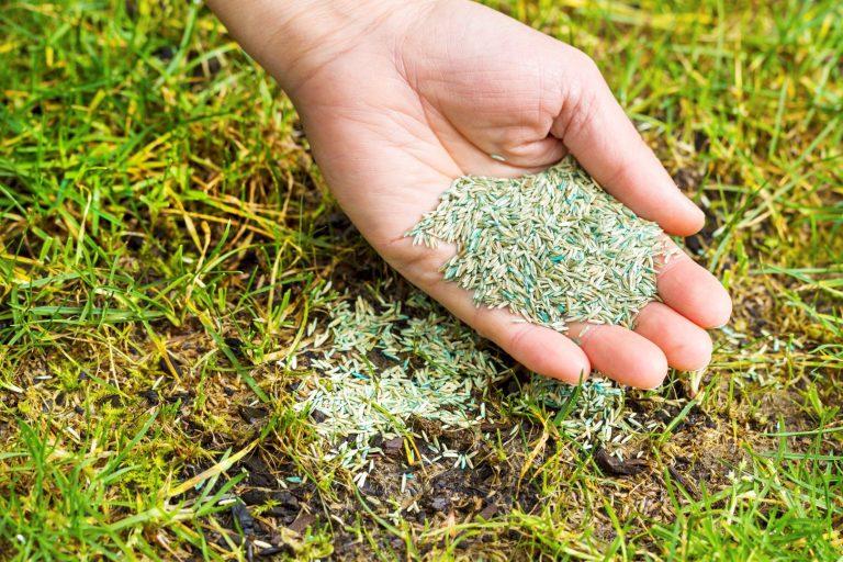 Mooi Grasveld Door Het Juiste Gazonzaad