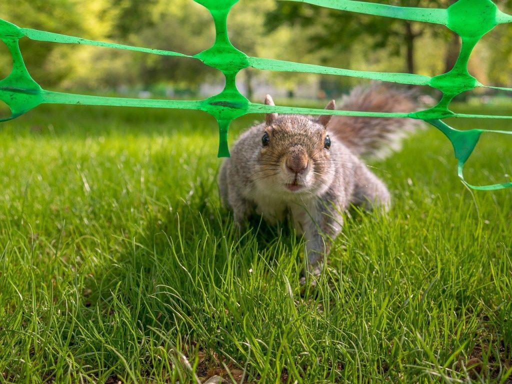 Squirrel 3462898 1280