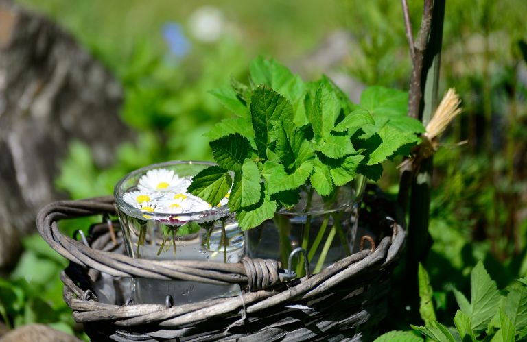 Tuinkruiden Als Natuurlijk Geneesmiddel Voor Planten